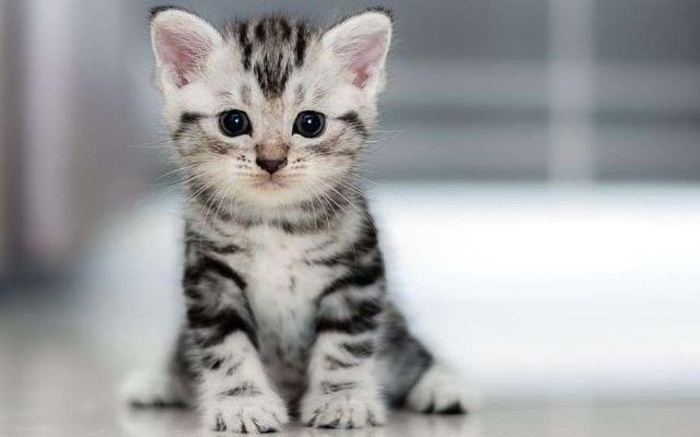Populares Os cuidados com filhotes de gatos | Blog - Da Vinci Clínica  EA66